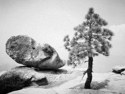 Tree-and-Rock-Yosemite-by-Peter-Huawei-P10