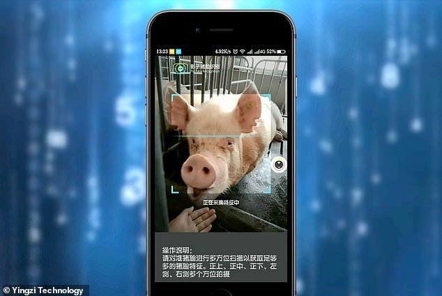 Counterpoint Yingzi Technology's facial recognition for pigs